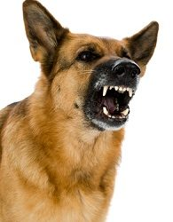 Dogs Body Language (Offensive Aggression) – Part 6