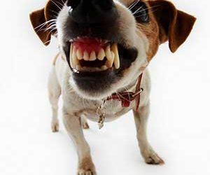 Dogs Body Language – Part 1