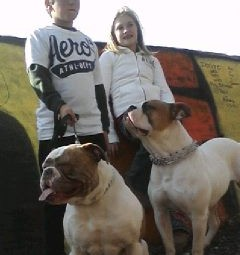 2 american bulldogs with kids