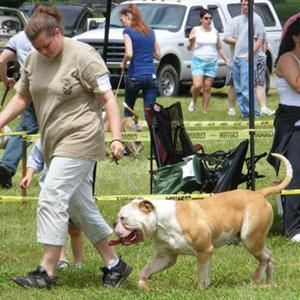 Beast of the East ABRA American Bulldog winner