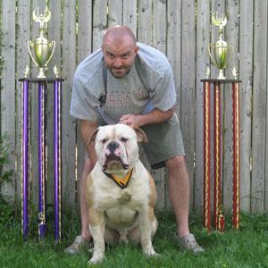 Bully American Bulldog weight pulling