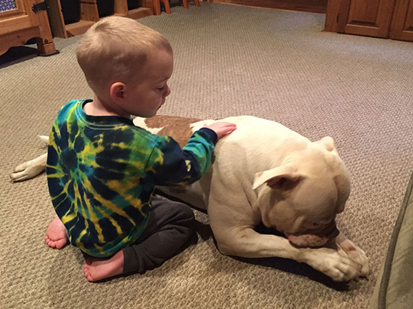 Great Temperament American Bulldog (Moo) playing with our 2 year old while eating a steak bone