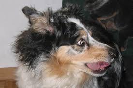stressed-dog