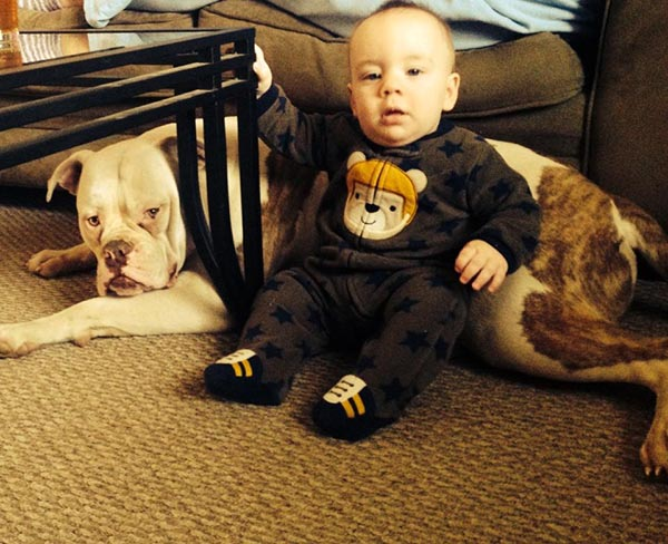 American Bulldog great with kids