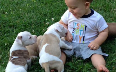 Our Son Braxton Training the pups