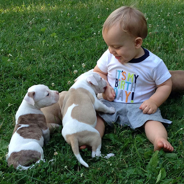 braxton-training-pups-june2014